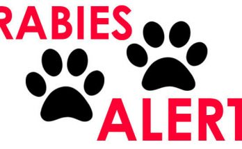What is Rabies : Preventions From Rabies Disease